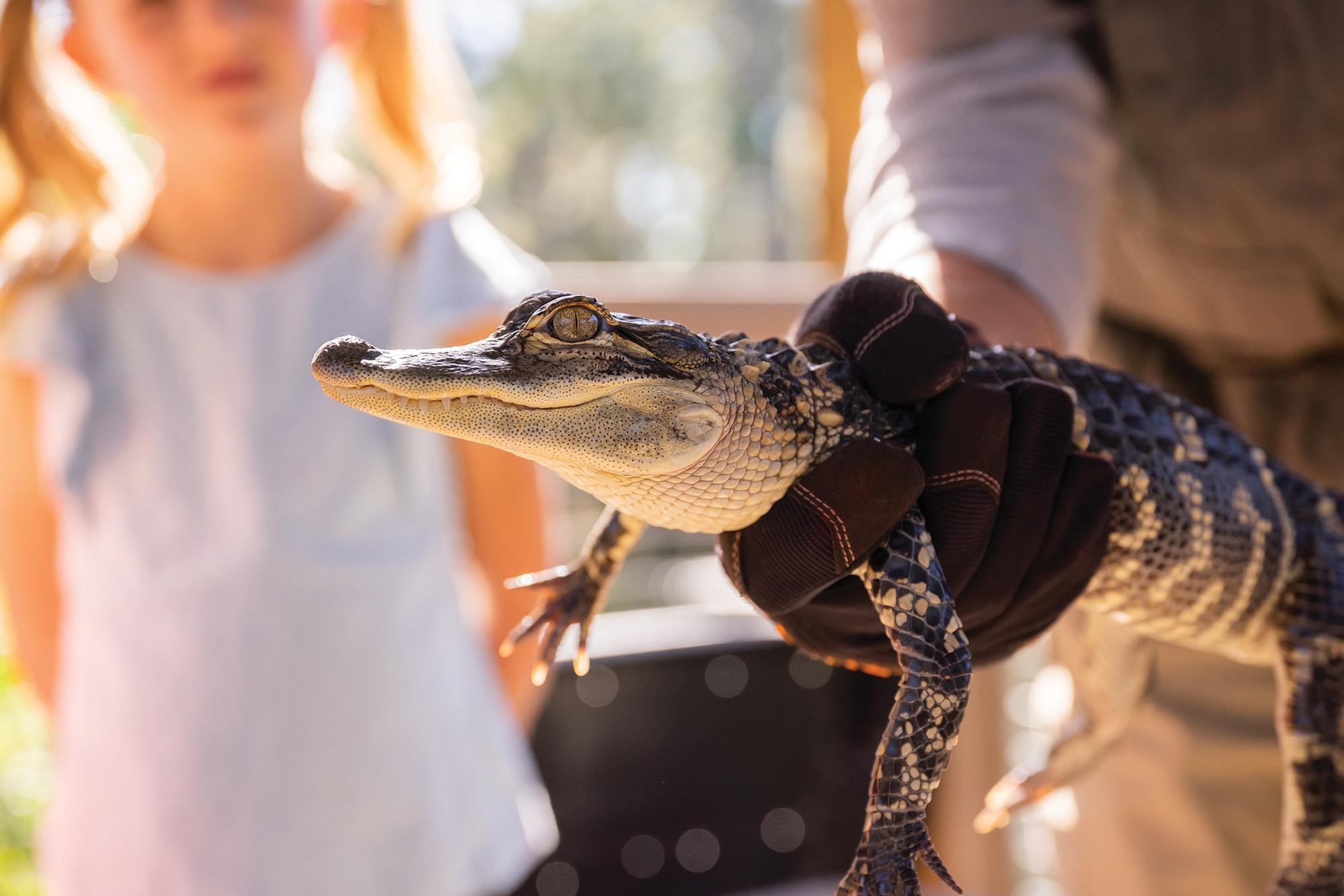 Gatorology 2