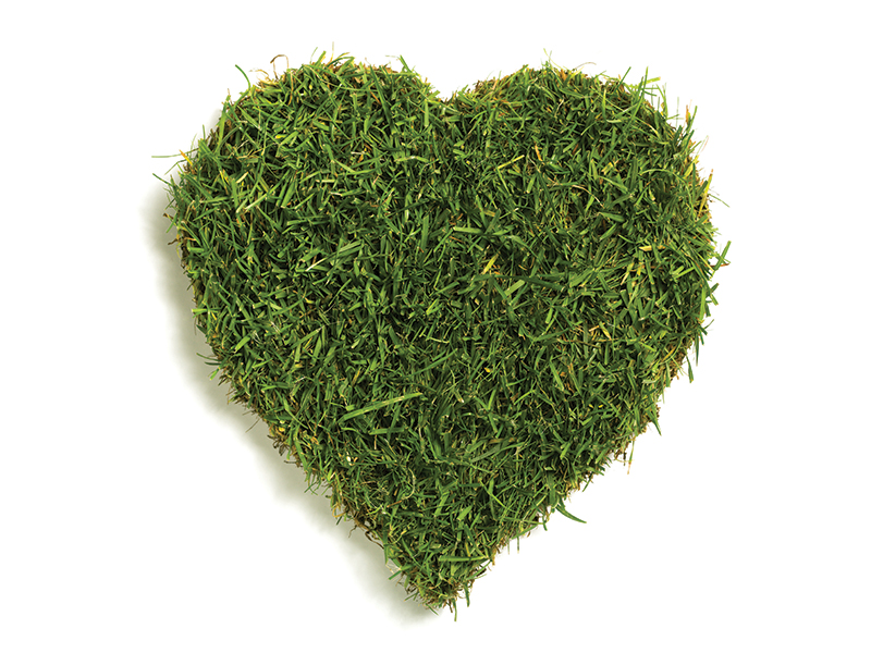 Lawn,sod,in,heart,shape,,isolated,on,white